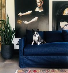 What We're Loving: Laid back and relaxed interiors! - Tuck Studio Featured: Gus* Modern Carmel Sofa in Washed Denim Indigo fabric with Scout the Boston Terrier! Art by Robert Moore. Interiors by Judith Mackin