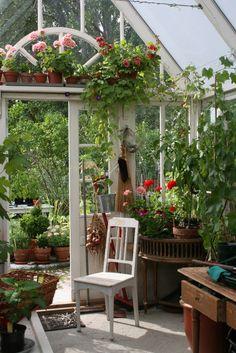 Lindas trädgårdsblogg: Tyras växthus