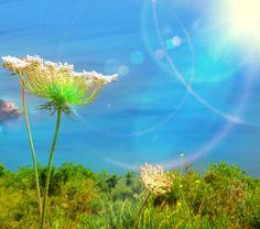 FOtos sobre a minha vida ,NAtureza, Deus ,amor ,Portugal , Margem sul ,barreiro ,hope , mother nature , truth , 7 ,