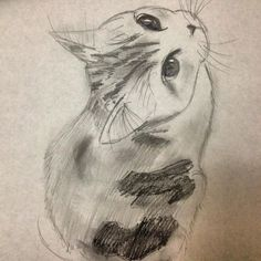 Calico Scottish-Fold Kitten Sketch by Emily-Smileyface - See more cat picture at. Cat Sketch, Drawing Sketches, Drawing Ideas, Animal Sketches, Animal Drawings, Gato Calico, Calico Cats, Kitten Drawing, Scottish Fold Kittens