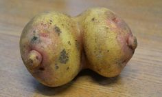 It's the breast vegetable we've seen for a long time: Farmer discovers hilarious rude-shaped potato while harvesting his crop