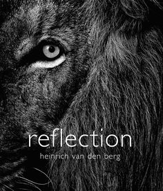 From an intimate shot of lions at a Kruger waterhole to a herd of elephants shaking off dust in Botswana, South African photographer, Heinrich van den Berg captures the continent's wildlife to stunning effect in a new book, Reflection, published this month
