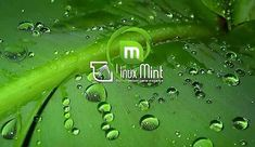Come installare Linux Mint sul PC Linux Mint, Computer, Internet, Windows, Operating System, Window, Ramen
