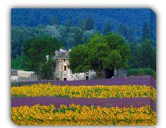 Provence Outdoor Canvas Art