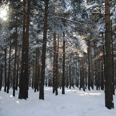 #vscocam #vsco #vscorussia #landscape #forest #wood #mountains #winter #snow #mistery #fairytale #sun #liveadventure #liveautentic #livefolk #adventure #travel #nature  #wild #road
