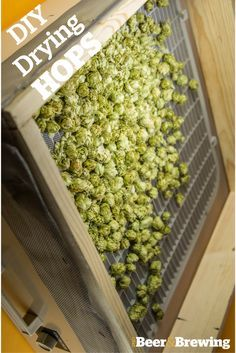 Here are some tips for drying out your own hops for future brewing.