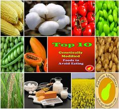 Farming & Agriculture: GMO alert: top 10 genetically modified foods to avoid eating Healthy Beauty, Health And Beauty, Health And Wellness, Nutrition Articles, Fitness Nutrition, Genetically Modified Food, Food Insecurity, Foods To Avoid, Eat Right