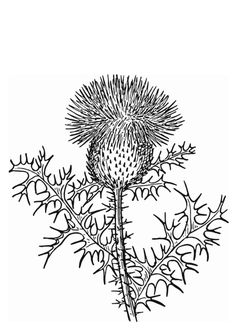 Coloring page thistle