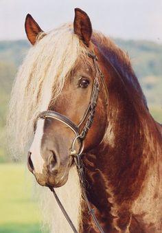 Rare Horse Coats 1000+ images about Bla...