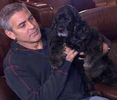 George Clooney and his rescue Cocker Spaniel Einstein Black Cocker Spaniel, Cocker Spaniel Puppies, American Cocker Spaniel, Rescue Dogs, Animal Rescue, Pet Dogs, Doggies, Celebrity Dogs, Celebrity Pictures