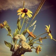 Pretty things that grow on the prairie.