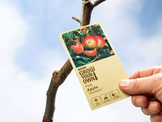 Grow Little Fruit Trees for Big Rewards An ingenious pruning method for growing an orchard in a small backyard - Tree Pruning Prune Fruit, Pruning Fruit Trees, Dwarf Fruit Trees, Tree Pruning, Bonsai Trees, Miniature Fruit Trees, Plum Tree, Peach Trees, Tree Base