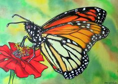 Monarch - The Watercolors of Chris Weiermiller - Paintings & Prints Animals Birds & Fish Bugs & Insects Butterflies & Moths - ArtPal Painting Prints, Watercolor Paintings, Watercolors, Artwork Online, Online Art Gallery, Original Art, Original Paintings, Ap Studio Art, Art For Sale Online