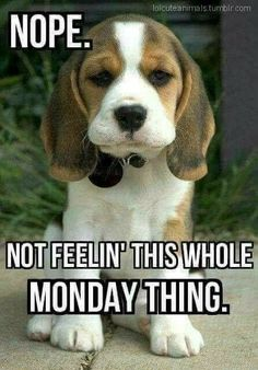 Monday Quotes Funny Best 50 Funny Monday Quotes  Happy Monday Quotes Funny Happy And Mondays