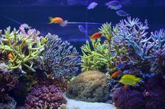 A Reef Central Tank of the Month.    That's an aquarium, in case you're wondering ;)