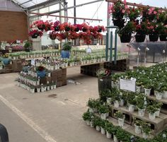 Proven Winners at Calloway's Nursery in North Plano Proven Winners, This Is Us, Nursery, Table Decorations, Garden, Flowers, Plants, Home Decor, Garten