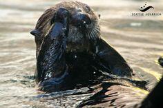 Seattle Aquarium - Google+