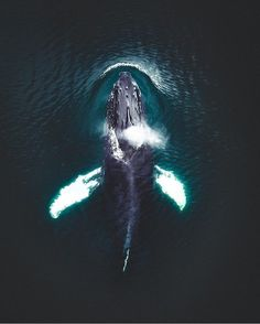 "9,052 Likes, 21 Comments - The Ocean (@ocean) on Instagram: ""The beautiful humpback whale, there are few creatures in the world as marvellous as this Great…"""