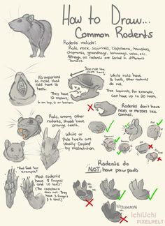 How To Draw Common Rodents! by IchiUchi.deviantart.com on @DeviantArt