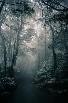 road through a foggy forest bright color Photo Ciel, Landscape Photography, Nature Photography, Magic Places, Beautiful Places, Beautiful Pictures, Dark Forest, Misty Forest, Fantasy Landscape