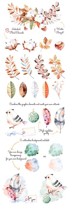 Watercolor feathers birds