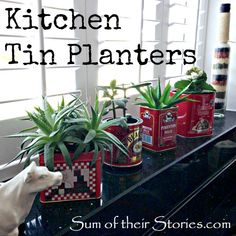 Kitchen planters from old tins #recycle #kitchen #reuse #planter