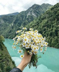 Papatya / Daisy Fauna and Flora are two terms frequently heard by people who spend time in nature. Flowers Nature, Pretty Flowers, Wild Flowers, Spring Aesthetic, Flower Aesthetic, Plants Are Friends, Belle Photo, Planting Flowers, Succulents