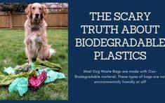 Clean has the best in environmentally friendly dog products. Check out our paper biogdegradable poop bags, mobile dog shower, and natural dog shampoos. Biodegradable Plastic, Biodegradable Products, Natural Dog Shampoo, Dog Shower, Dog Paws, Dog Grooming, Dog Friends, Swag, Dogs