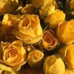 Shades Of Yellow Color Names For Your Inspiration - Going To Tehran Yellow Aesthetic Pastel, Rainbow Aesthetic, Aesthetic Colors, Aesthetic Vintage, Aesthetic Roses, Spring Aesthetic, Aesthetic Art, Image Tumblr, Yellow Theme