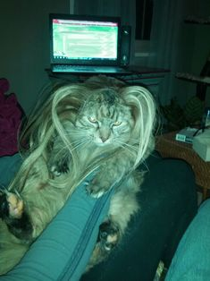 My girlfriend put her hair extensions on her cat. It was less than thrilled.