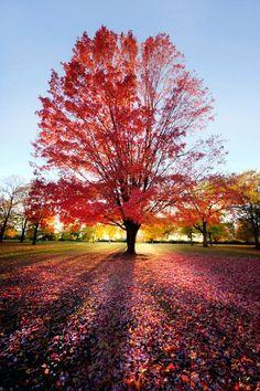 Crimson Sunset, Schaumburg, Illinois, United States | Amazing Snapz