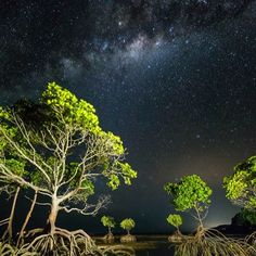 Welcome to the enchanted mangrove forest!  Something other-worldly about these gnarled guardians of the mudflats under a night sky... ************************************************ Canon 5D Mk3,  11mm ISO 5000, 30 sec @ f4 + a few Canon speedlites. ************************************************ #exploringaustralia #ig_australia  #australia_shotz #cool_capture_  #amazing_pictures #aroundtheworldpix #cruising_australia #artsyheaven #nature_wizards  #nature_skyshotz  #special_shots…