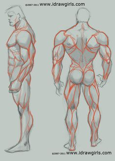 Google Image Result for http://idrawgirls.com/images/2009Q4/man_anatomy_drawing_study_backview.jpg