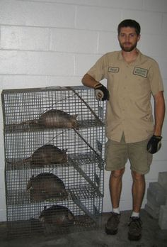 1000+ images about Armadillos on Pinterest | Armadillo ...