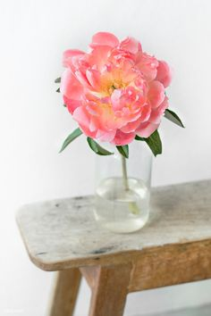 Pink peony in a vase by the wall | free image by rawpixel.com / Jira Pink Peonies, Peony, Unicorn Birthday Cards, Flower Vases, Flowers, Wallpaper Stickers, Image Fun, Nature Tree, Flower Backgrounds