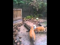 Enrichment puzzle feeder - YouTube