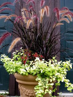Lime green licorice, coleus, and purple fountain grass in garden pot. Lime green licorice, coleus, and purple fountain grass in garden pot. Outdoor Flowers, Outdoor Planters, Garden Planters, Outdoor Gardens, Container Flowers, Flower Planters, Flower Pots, Full Sun Container Plants, Fountain Grass