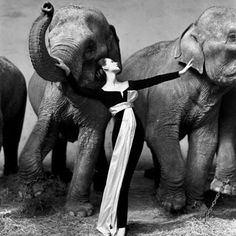 Dovima with Elephants, evening dress by Dior, Cirque d'Hiver, Paris 1955, Avedon