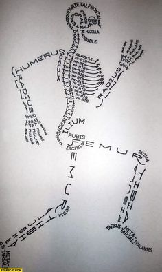 Human bone names creative infographic drawing