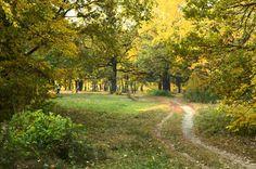 Осень.Пейзажи дендропарка г.Полтава.2011. Детальное описание здесь http://vdemchenko.com