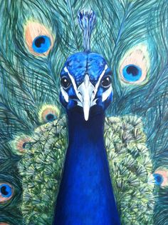Peacock, oil on canvas, by Dawn Smith