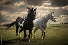 Horses prairie by Aline CAID WACHTEL