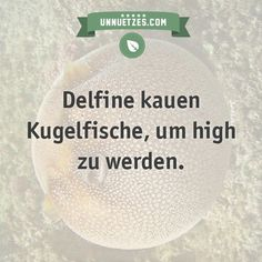 Delfine kauen Kugefische The More You Know, Good To Know, Best Quotes, Funny Quotes, Animal Facts, Funny Facts, Things To Know, Good People, Quotations