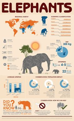 Behance :: Animal Infographic: Elephant by Stephanie Blackwell