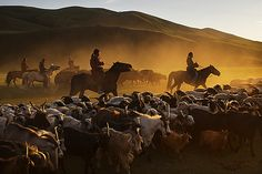 Sunset corral in the Blue River valley , Mongolia by Timothy Allen