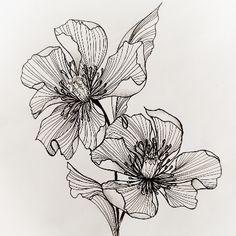 Flower Drawing Tutorials, Flower Art Drawing, Flower Line Drawings, Flower Sketches, Floral Drawing, Art Sketches, Painting & Drawing, Art Drawings, Illustration Botanique