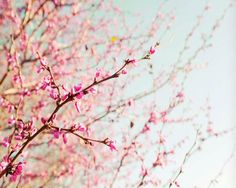 Blossoming Trees Photo Art