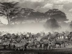 National Geographic: Best Photos of April 2013  -  Migration