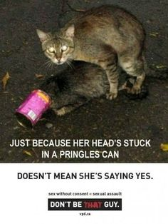 I'm not sure if this was meant to be funny. But it's freakin hilarious Crazy Cat Lady, Crazy Cats, Animal Memes, Funny Animals, Acting Quotes, My It Works, Uber Humor, Humor Humour, Weird Pictures