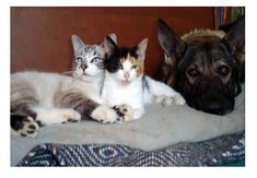 Leerburg | Introducing Dogs or Puppies into Homes with Cats